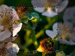 jquery Jcrop图像裁切插件中文api文档