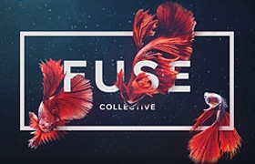 Fuse Collective | Creative Design and Production S